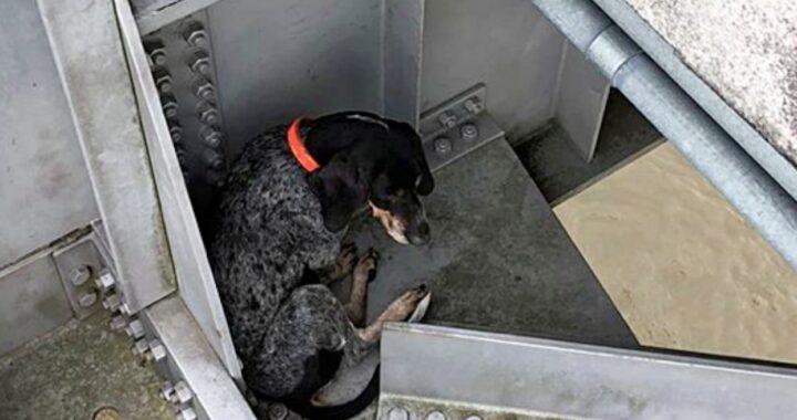 Poliziotto salva un cane bloccato sotto un ponte