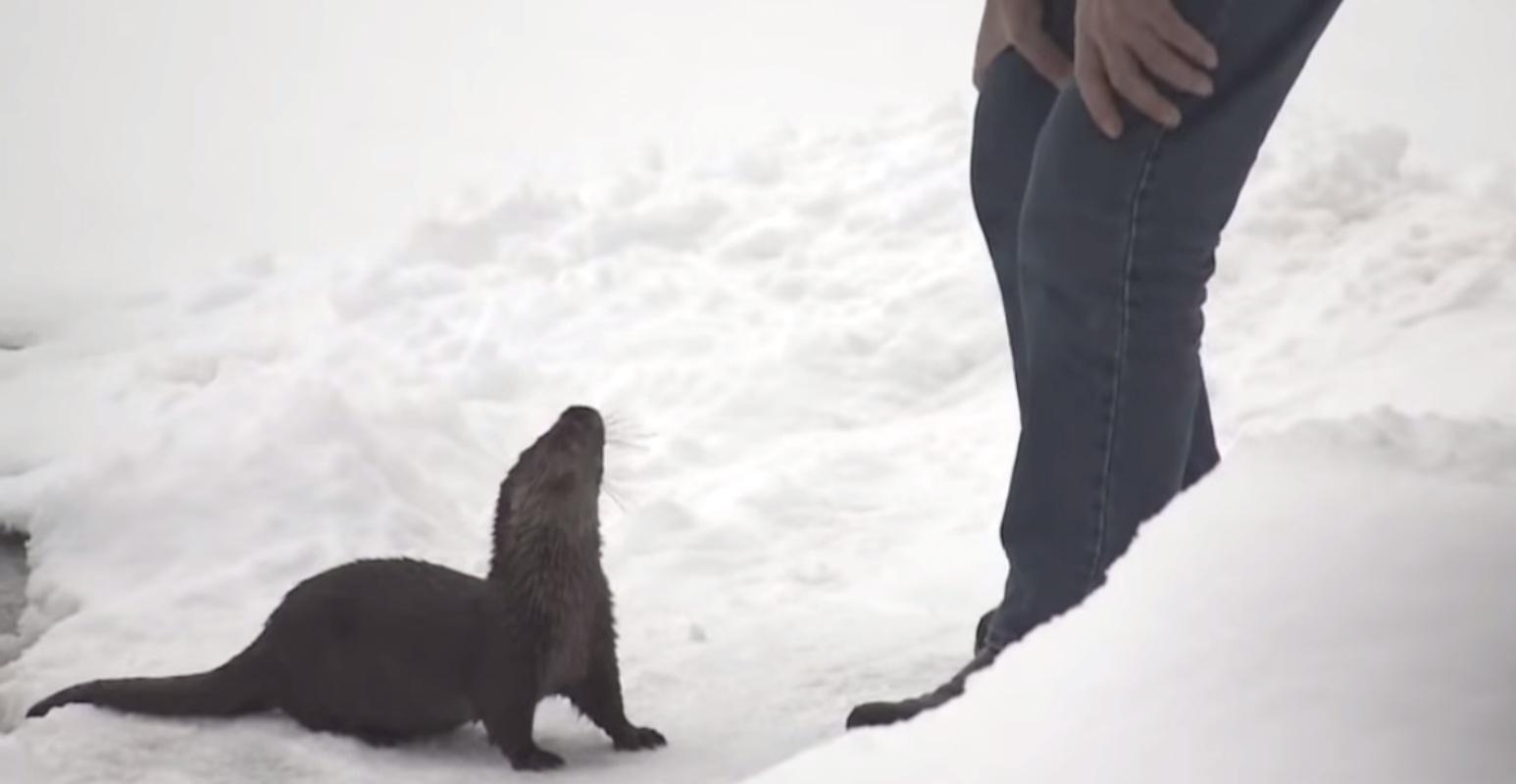L'amicizia tra Seppo Laamanen e la lontra