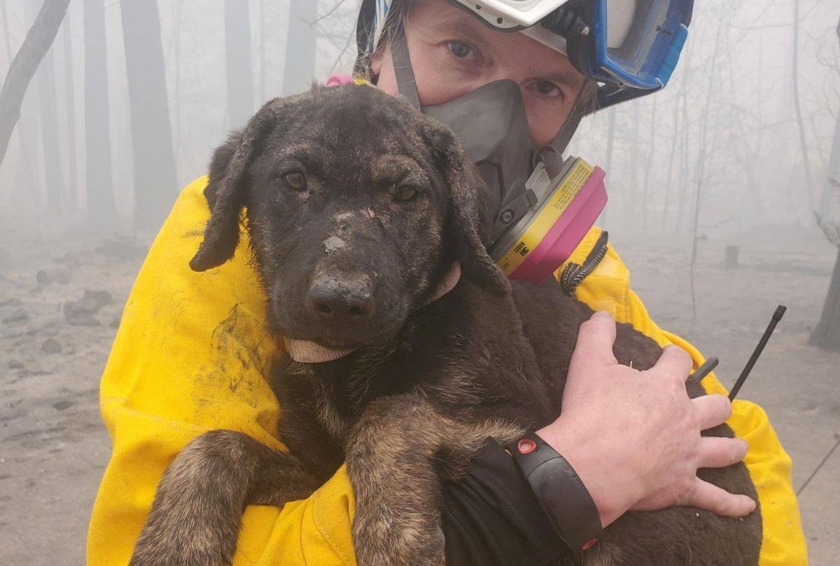 Trooper, il cagnolino salvato dai Vigili del Fuoco