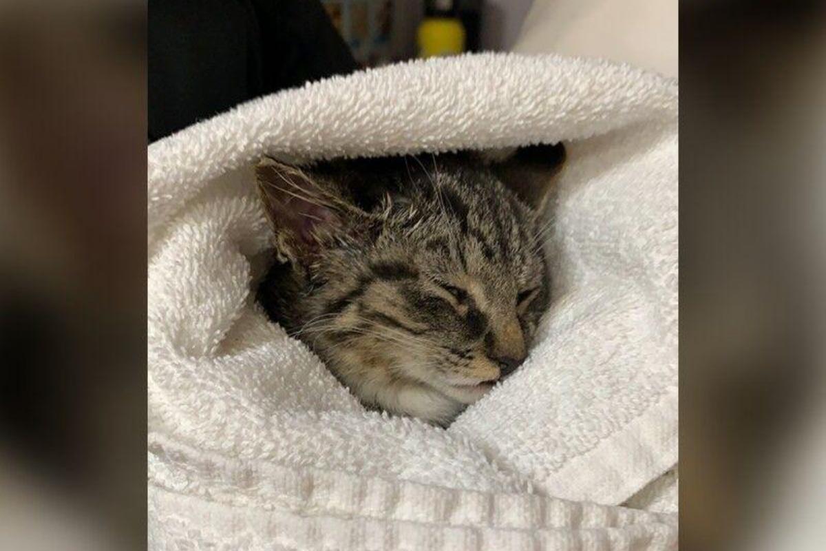 abbandonato gattino