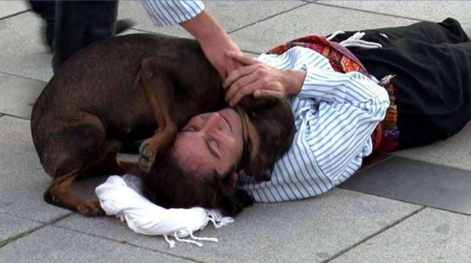 Attore e il cane randagio