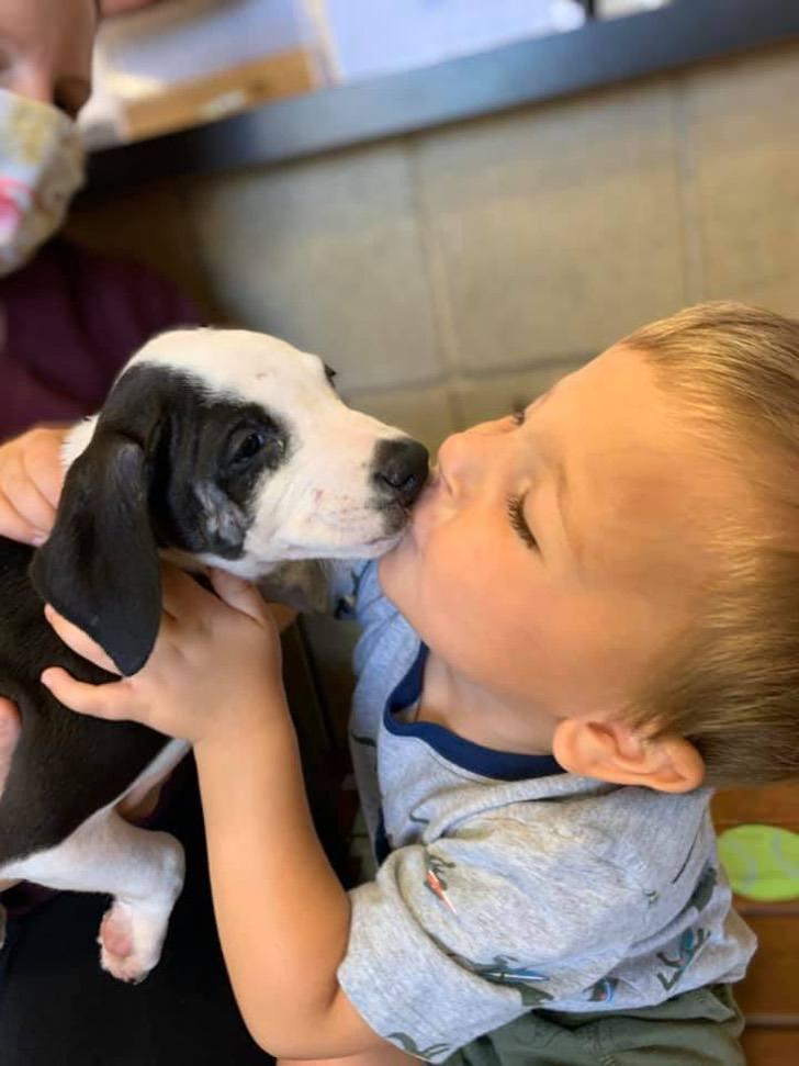 Il bacio tra il bimbo e il cane