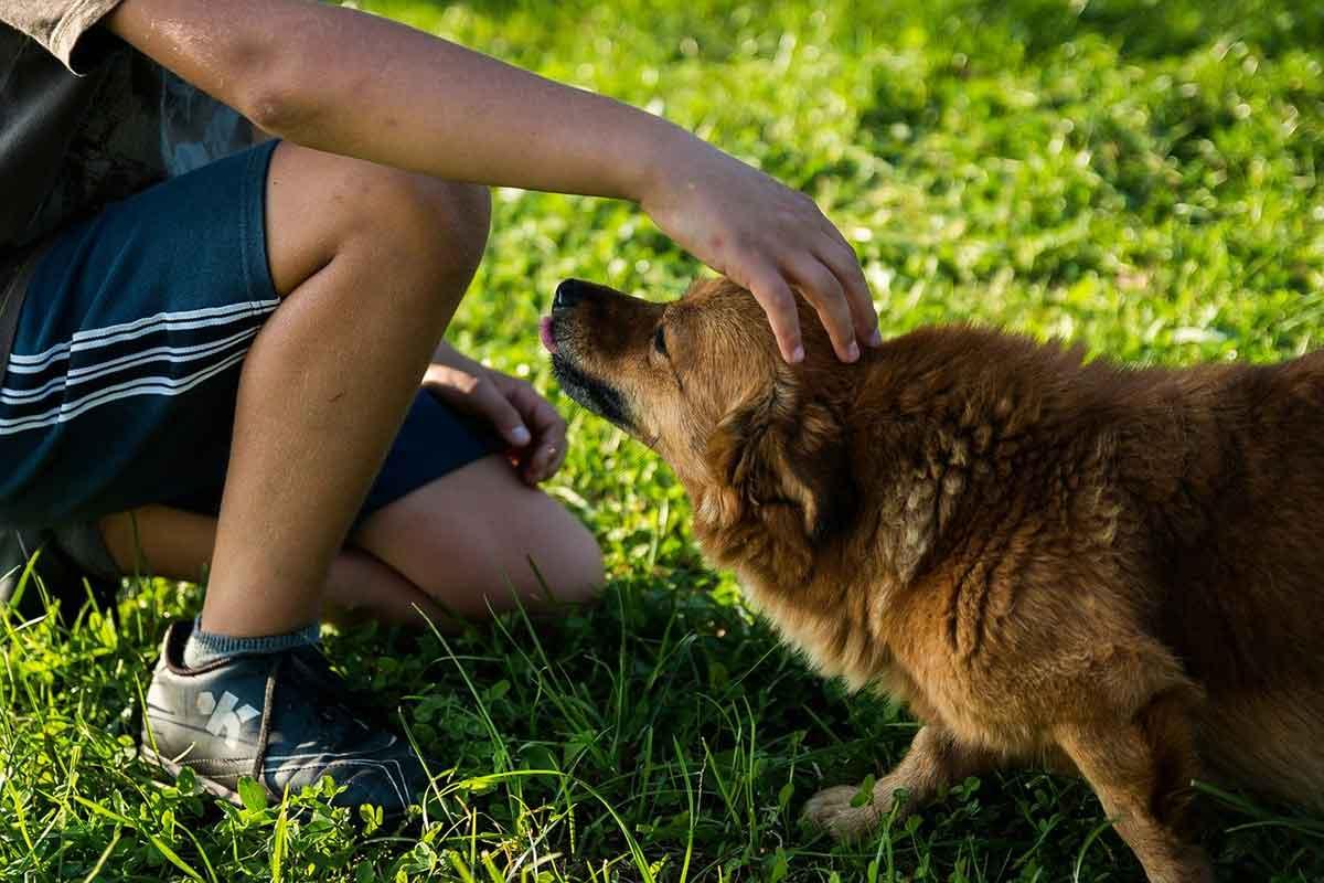 Bambino salva un cane