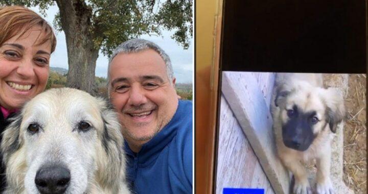 Il cucciolo Cloud e Benedetta Rossi