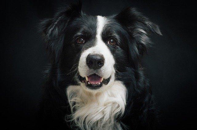 Cane bianco e nero lasciato da solo