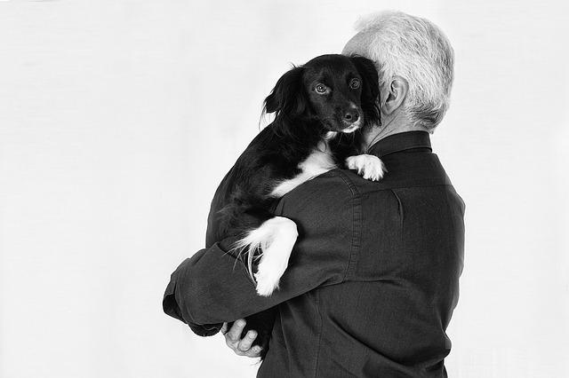 Cane affezionato al suo proprietario
