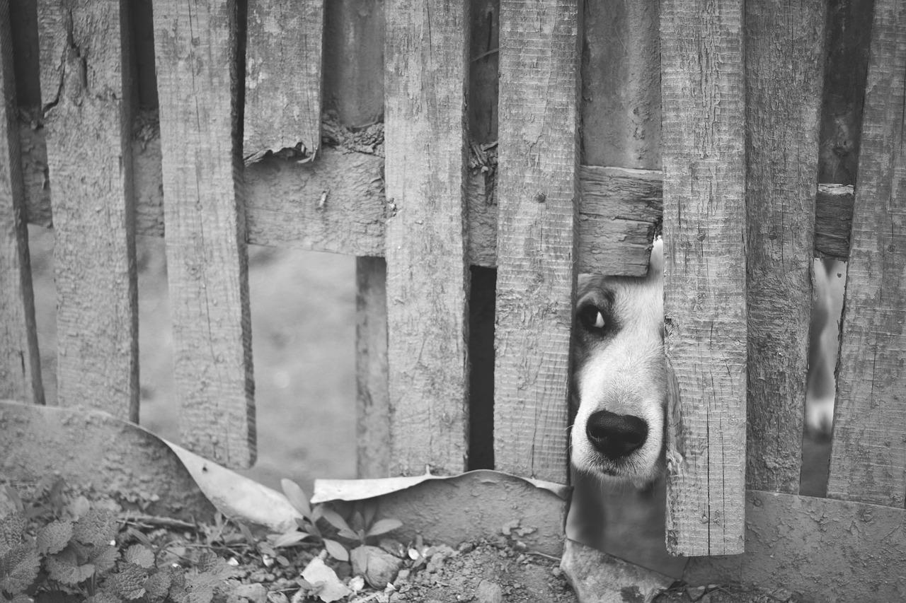 Il cucciolo nascosto per la paura