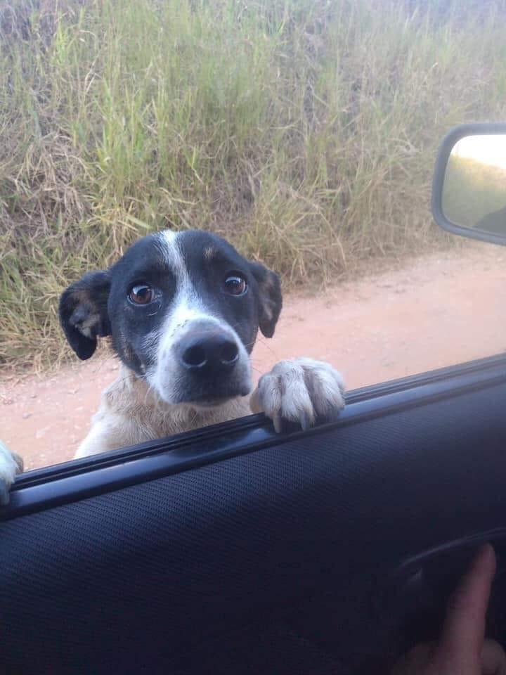 Cucciolo al finestrino dell'auto
