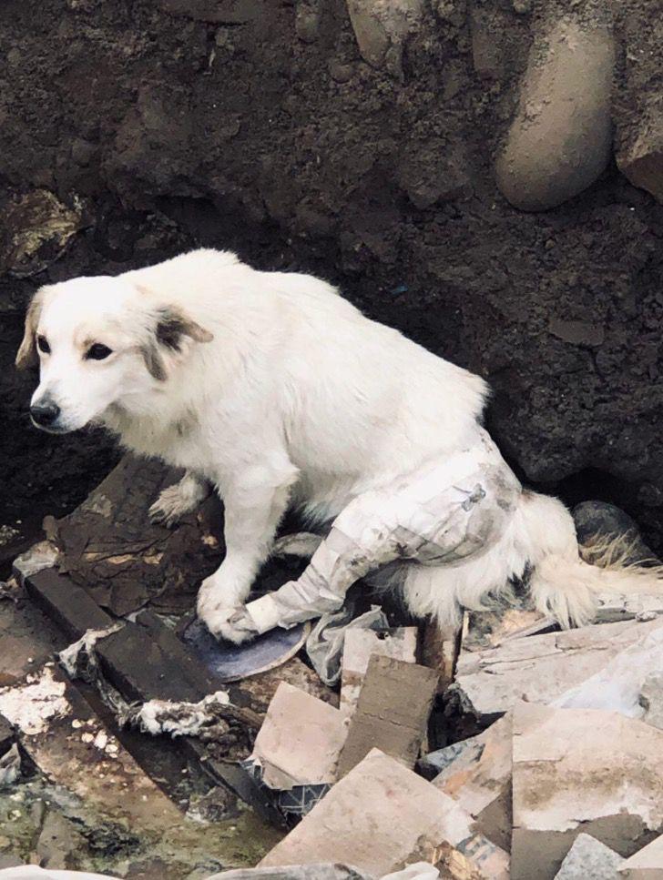Il cane con la zampa ferita
