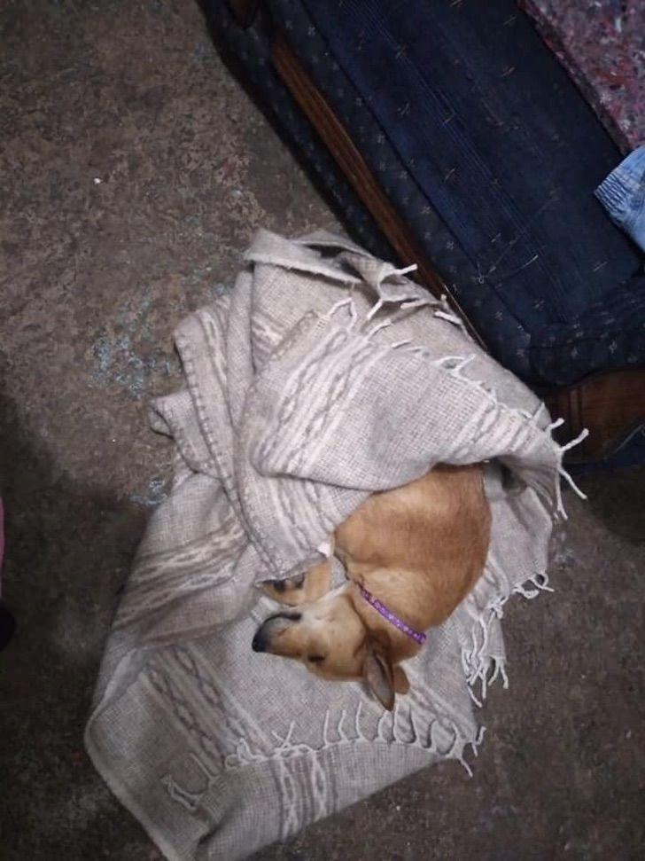 Il cane salvato dalla strada