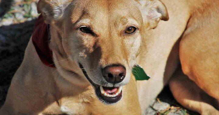 Cane dopo un inseguimento