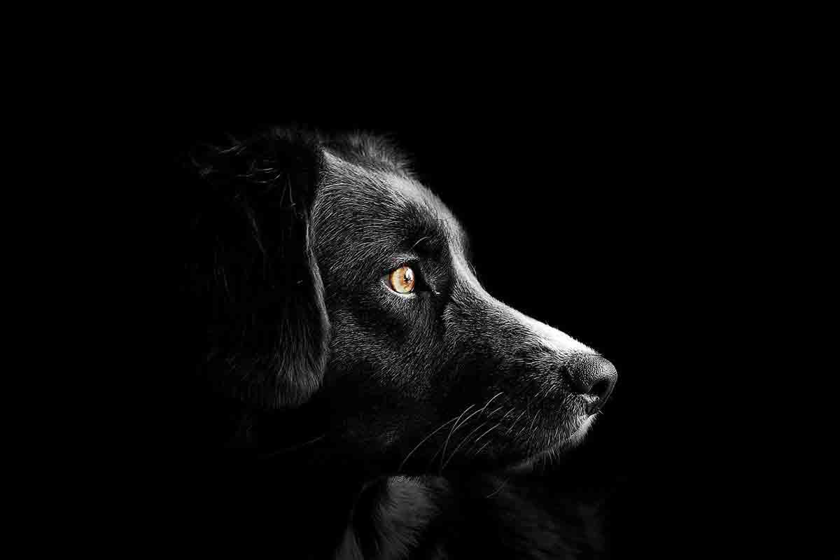 Cane aspetta il proprietario per 10 anni