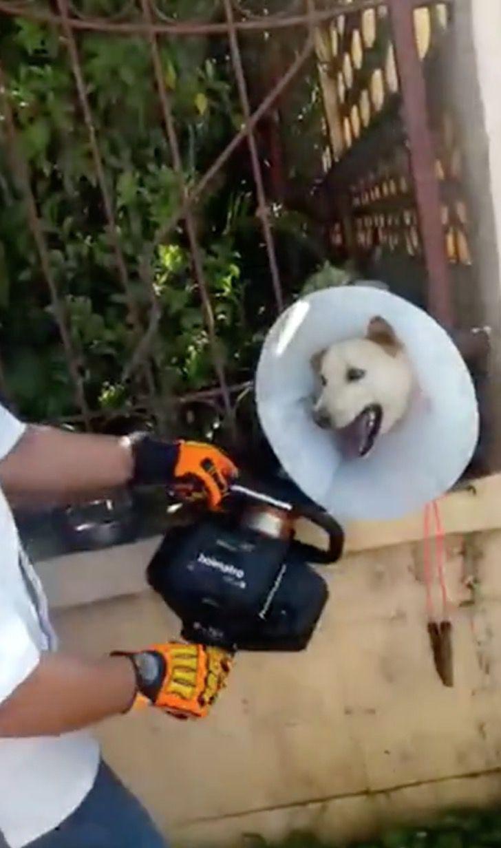 Salvare il cagnolino incastrato