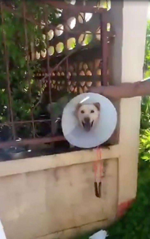 Cucciolo incastrato con il collare