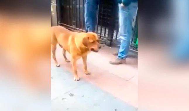 Il cagnolino  vuole giocare