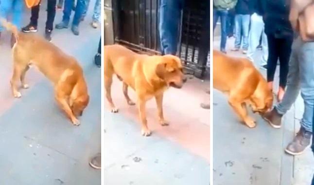 Cane gioca con una pietra in strada