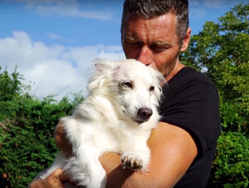 Il cane salvato da Viktor