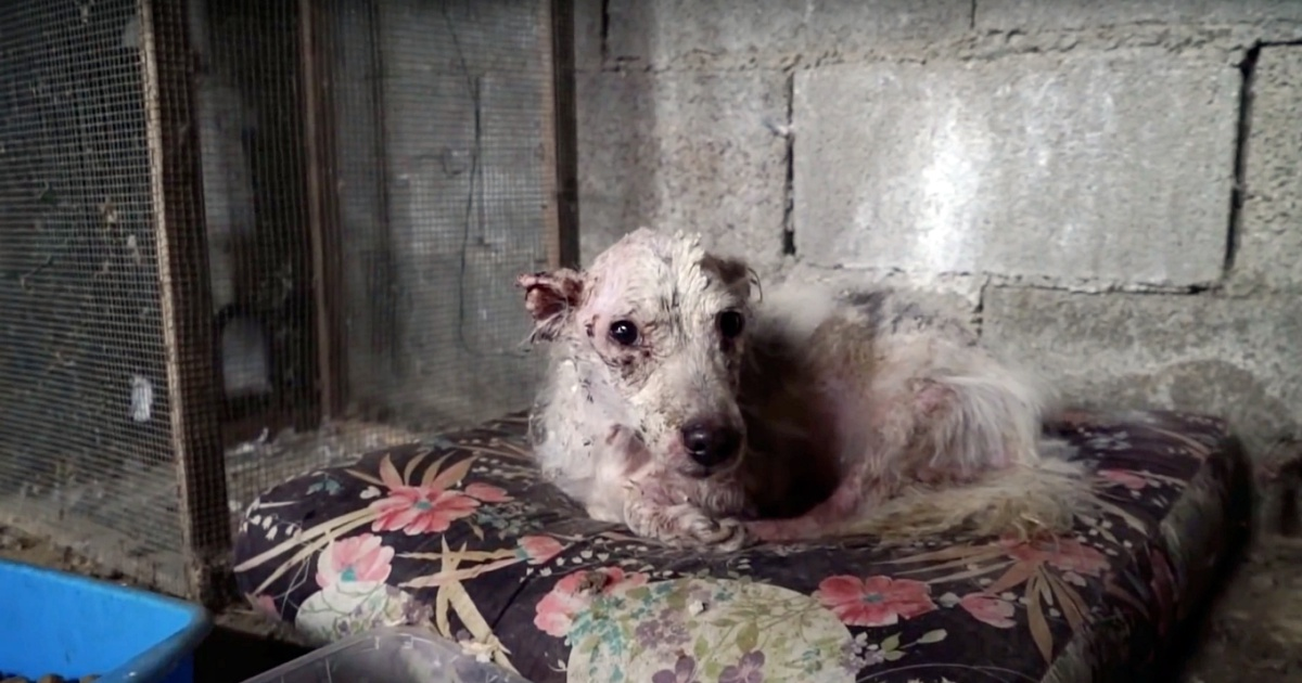 Il cagnolino maltrattato per anni