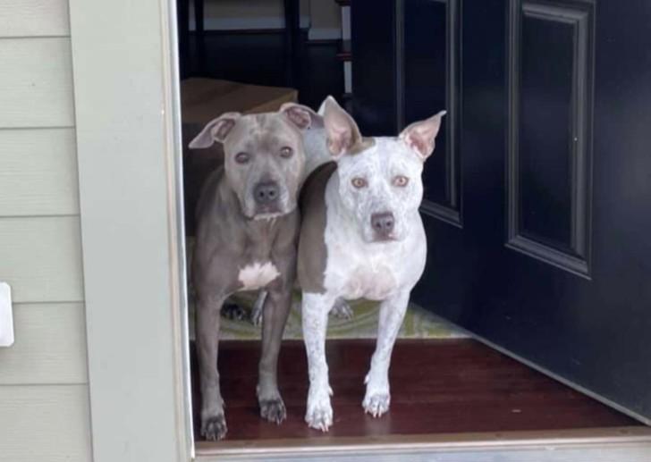 Cuccioli fratello e sorella