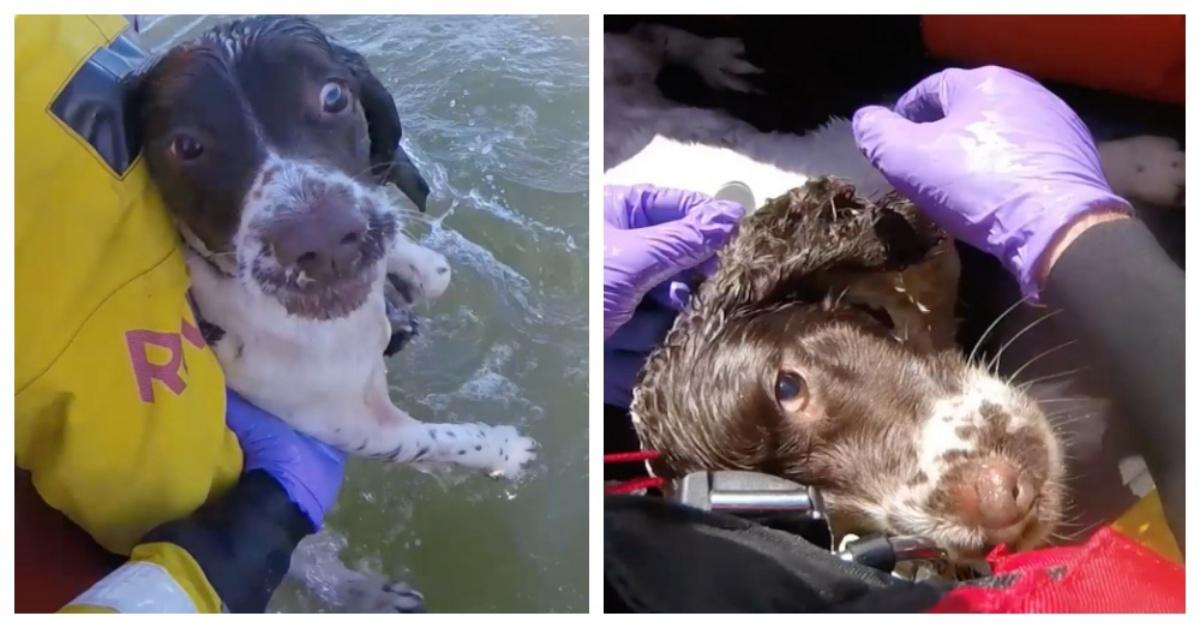 cane in mare salvato