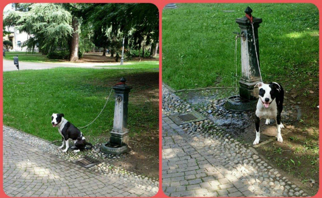 A Magenta il cane abbandonato nel parco
