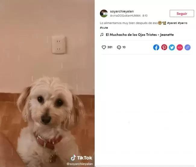 Cucciolo bianco con il proprietario