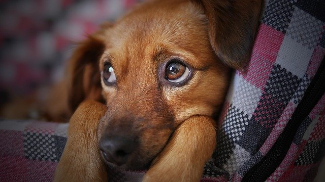 cane preso dal canile
