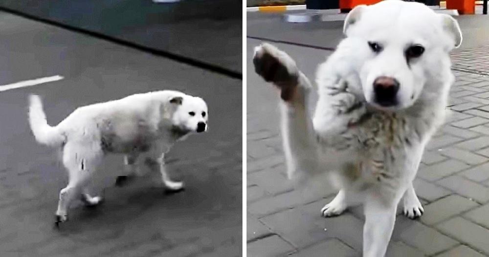 La storia del cane di strada