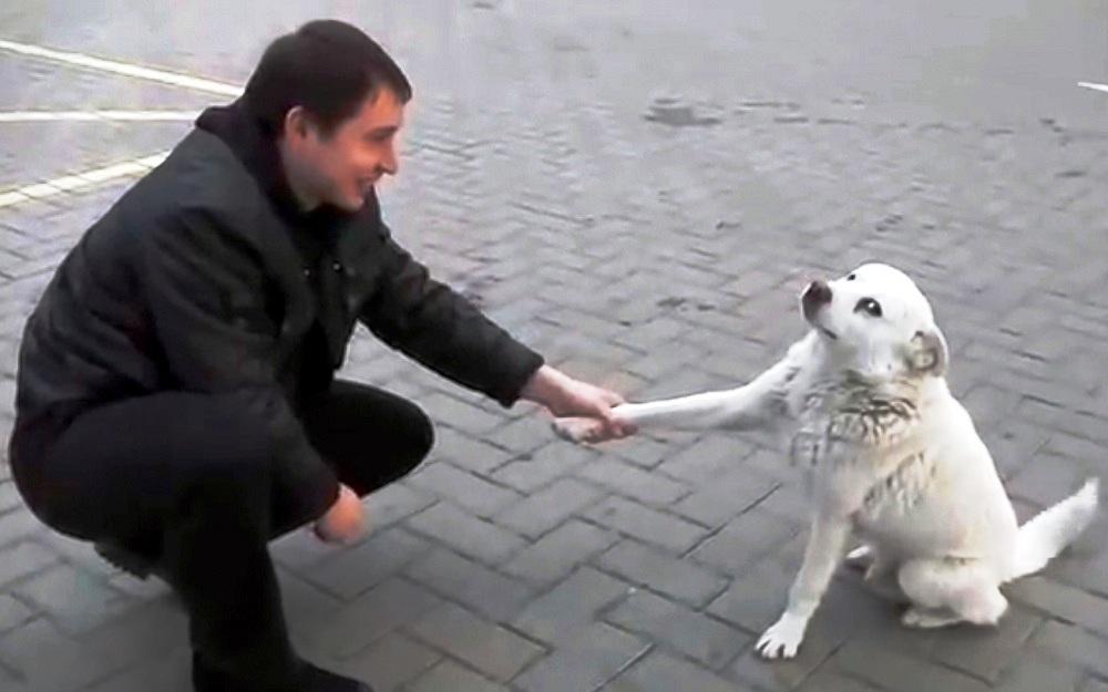 Dipendente e il cane di strada