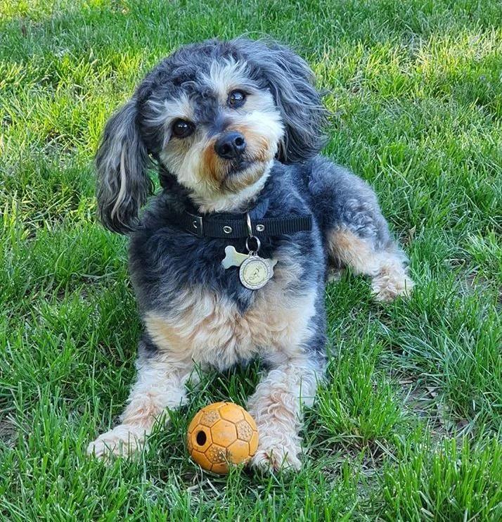 Il cane Rudy gioca con la palla