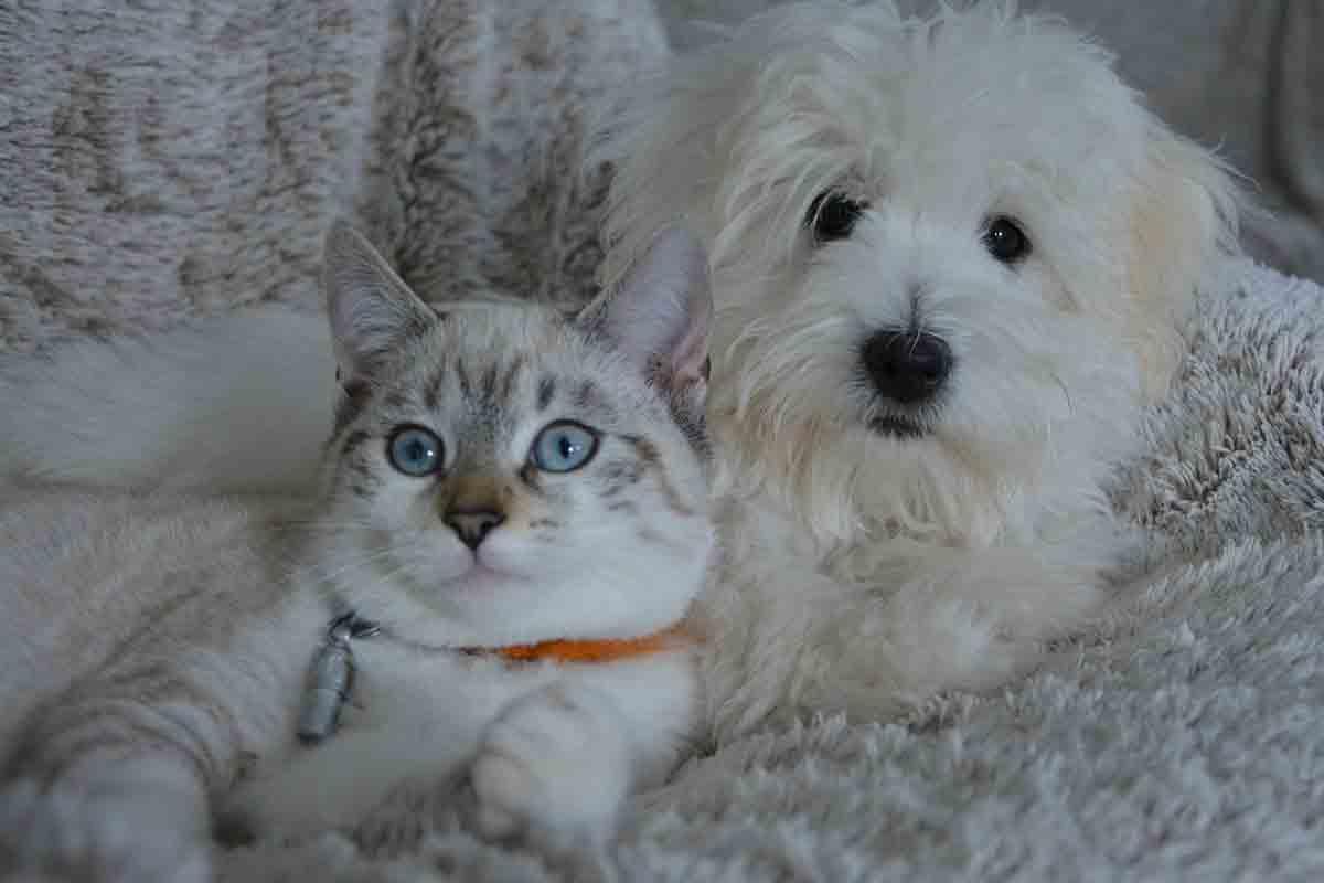 Cane salva il gatto