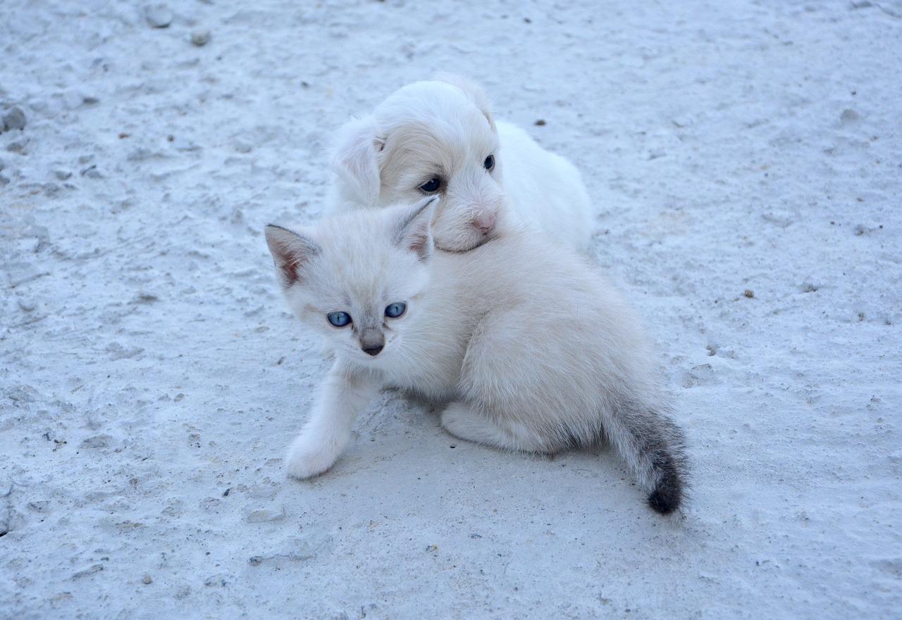 Micio e Fido giocano insieme