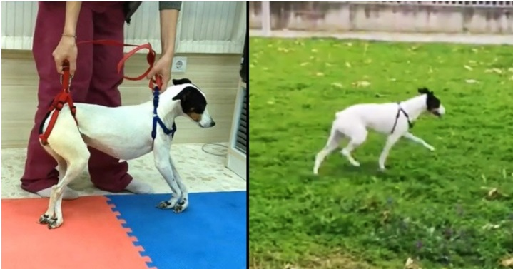 La fisioterapia per il cane