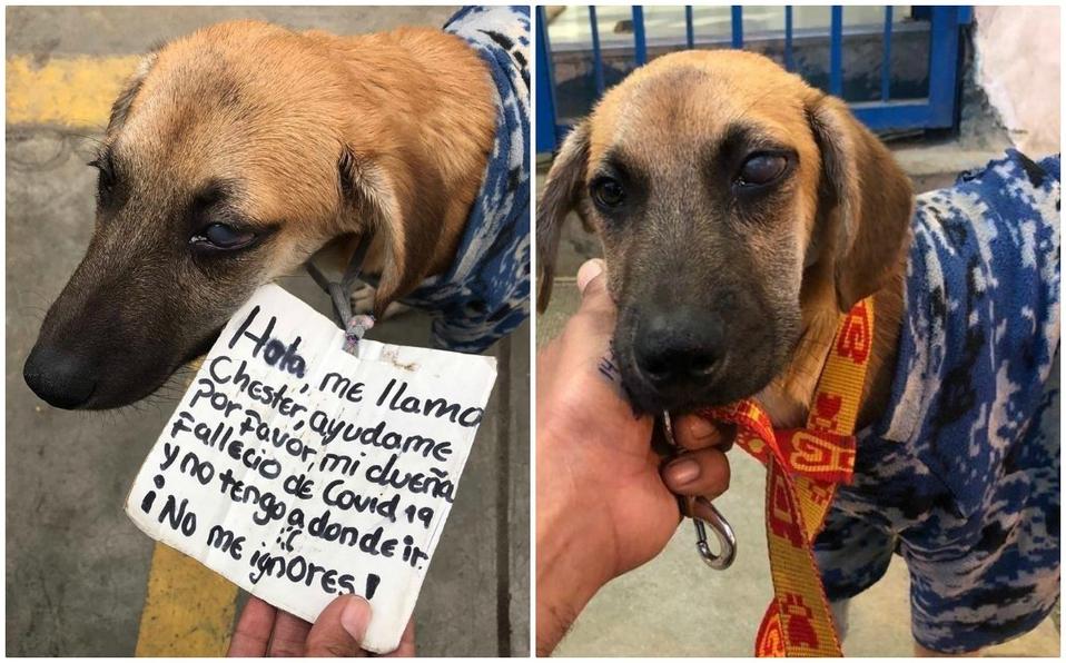 La storia del cane Chester