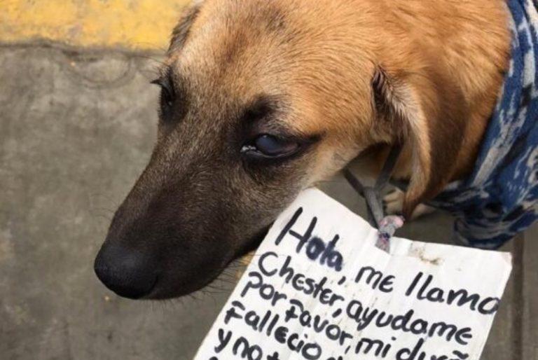 Chester il cane senza casa