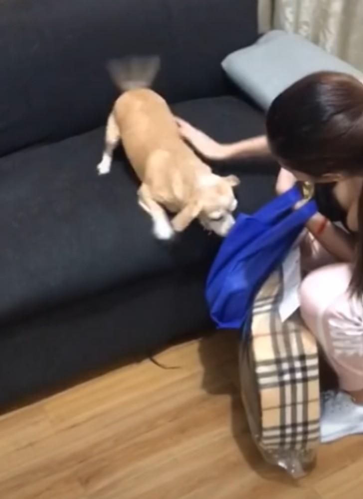 Il cane in lacrime per la disperazione