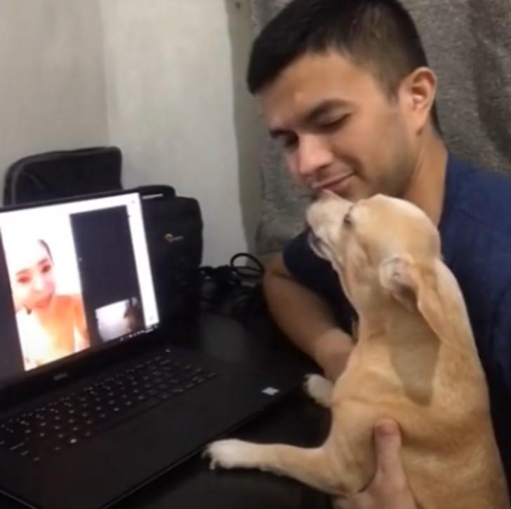 Il cane ulula davanti al computer