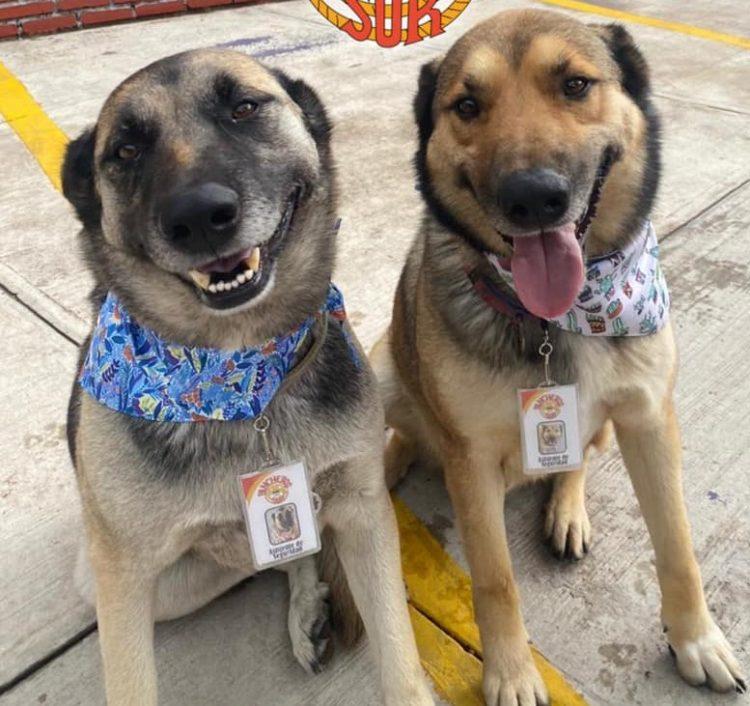 I cani lavorano al ristorante