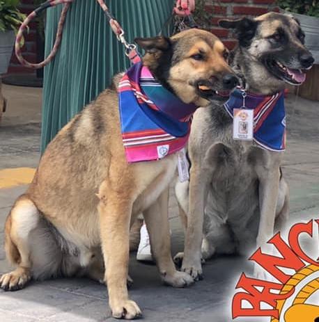 I cani accolti dal ristorante