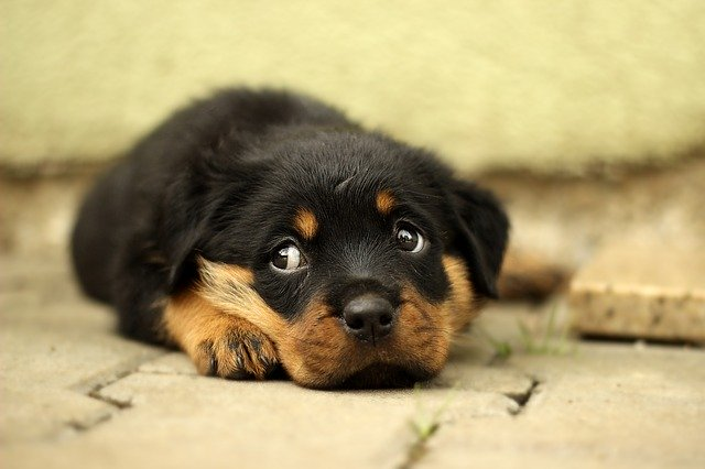 Cane senza una famiglia