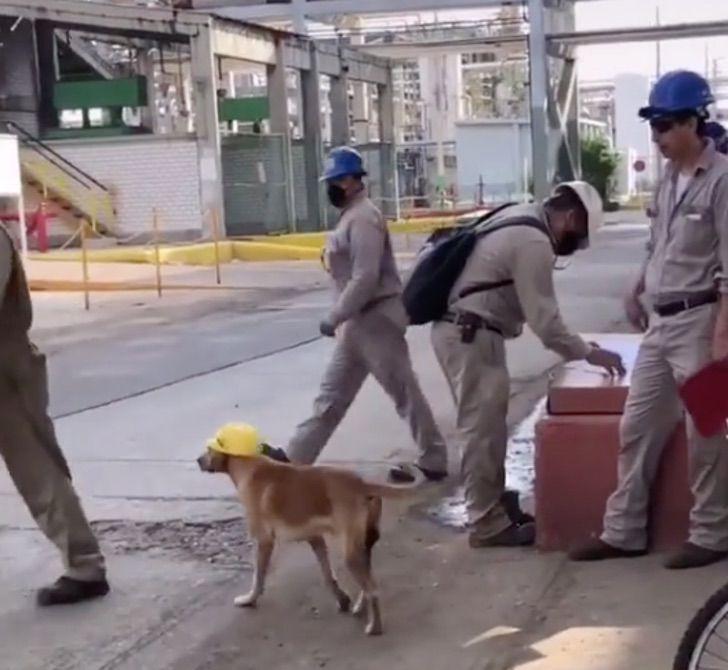 Operai giocano con il cane
