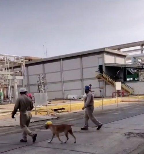 Il cane all'interno del cantiere