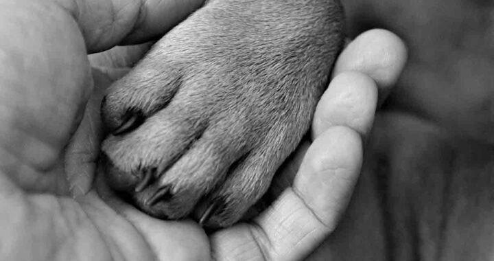 Zampa del cagnolino salvato