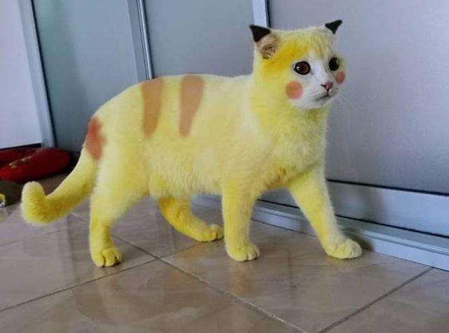 Il gatto trasformato in Pikatchu