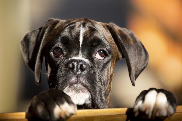 Cane aspetta il proprietario