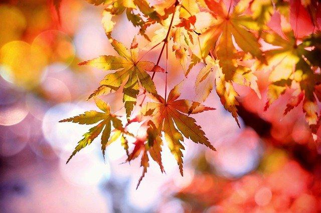 fiorisco come le foglie d'autunno