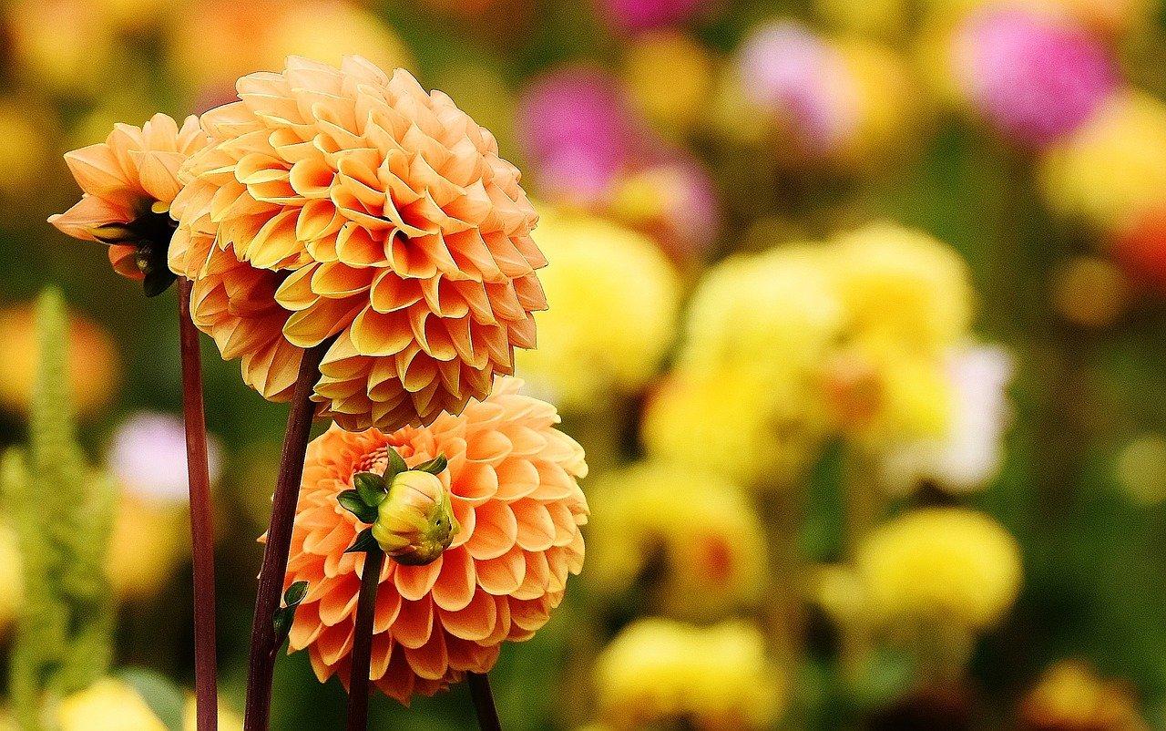 fiorisco in autunno
