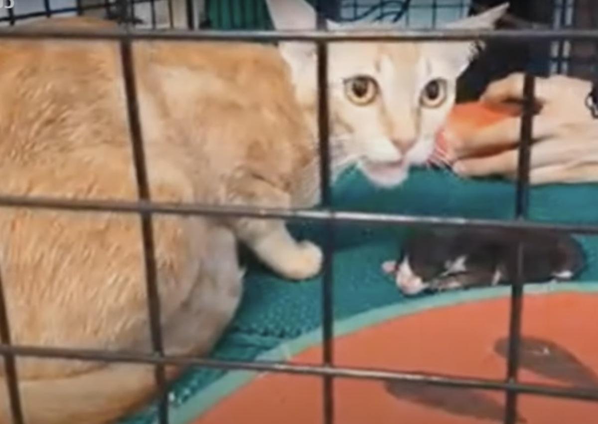 Il salvataggio di un gattino