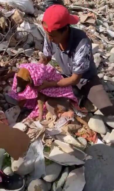 Cane vive nella spazzatura