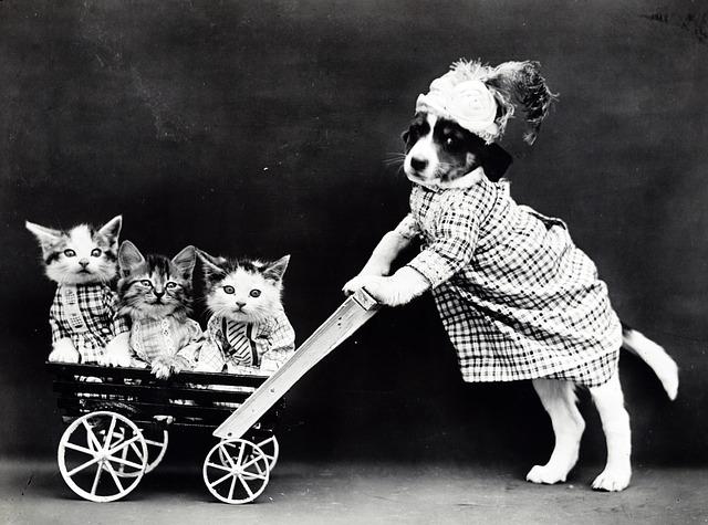 Cagnolino si prende cura dei micini